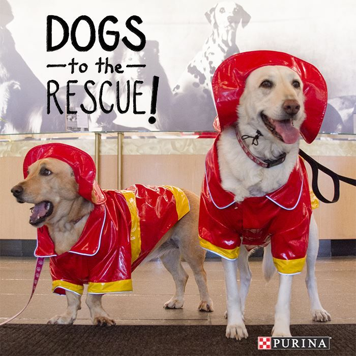 Dogs to the rescue! There is nothing better than a great dog Halloween costume. What will your dog be this year?