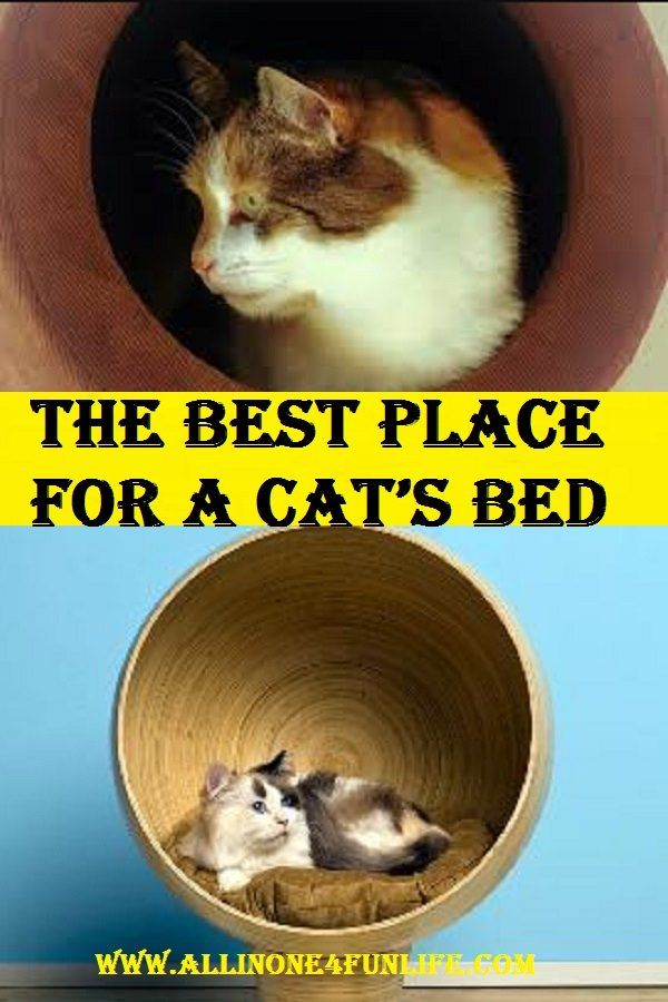 The Best Place For A Cat S Bed Cats Cat S The Good Place
