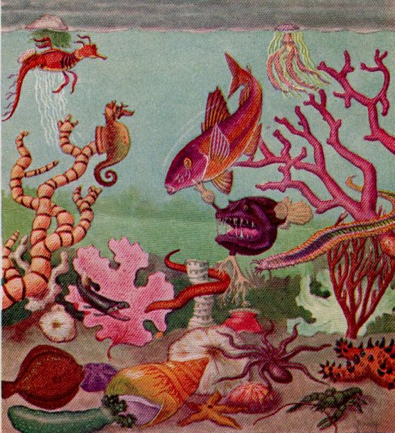 Antique print CORAL SHELLS FISH Life under the Sea 1940s colored lithograph