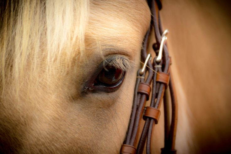 Copyright Eesome Photography Horse