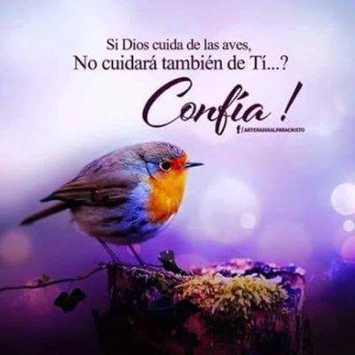 Imagenes Con Aves Y Mensajes De Dios