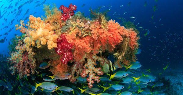 14 Contoh Gambar Pemandangan Dasar Laut Pemandangan Bawah Laut Di Indonesia Ini Menakjubkan Tiket Com Download Muat Tu Di 2020 Pemandangan Gambar Lukisan Lanskap