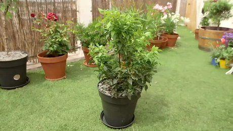 les 25 meilleures id es de la cat gorie arbuste persistant sur pinterest plante persistant. Black Bedroom Furniture Sets. Home Design Ideas