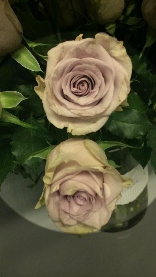 Rose  Silverado