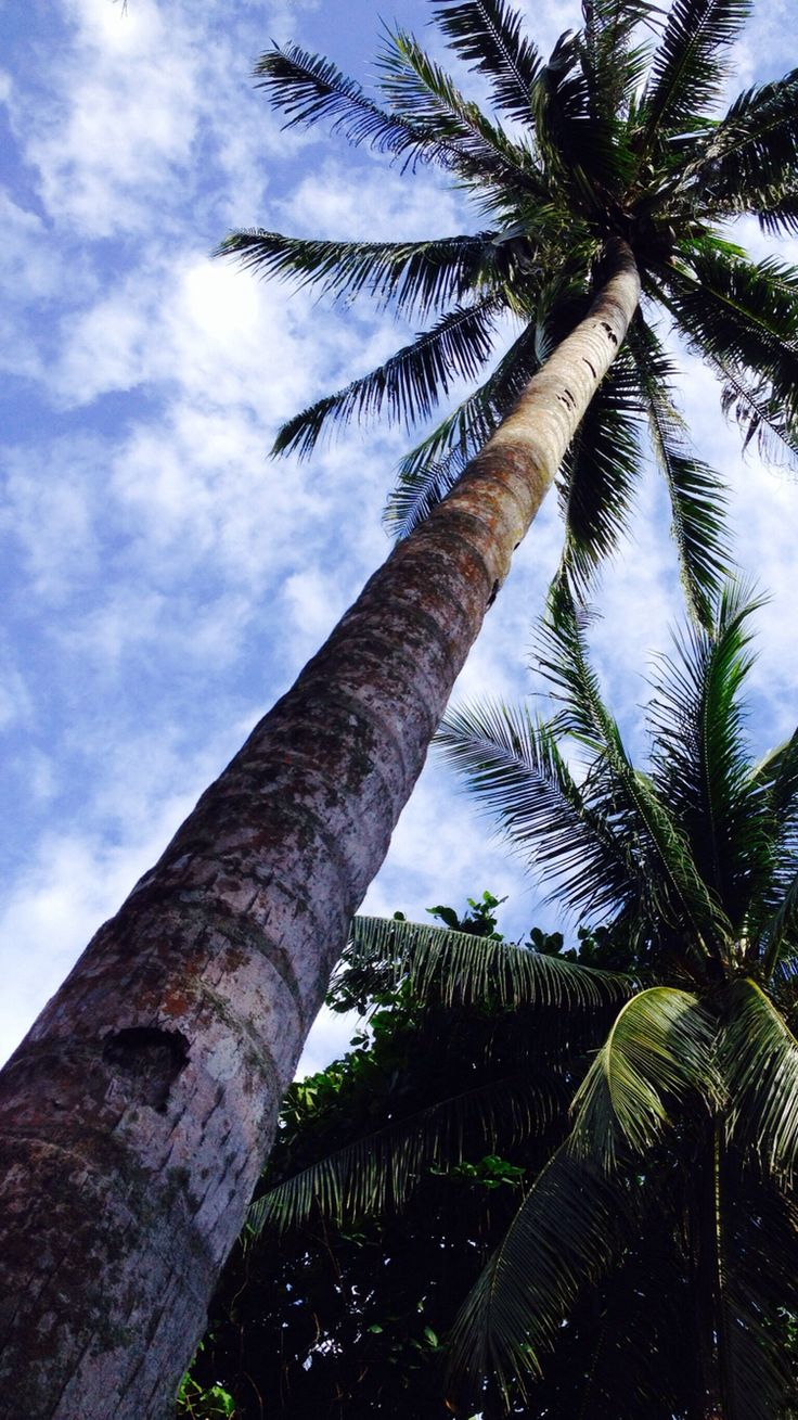 207 best Palm trees images on Pinterest   Backgrounds, Wallpapers and Iphone backgrounds