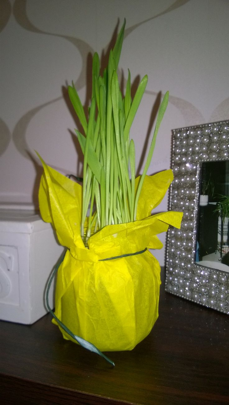 Diy: Pilttipurkin uusiokäyttö (pääsiäisruoho kasvamaan pilttipurkkiin, keltainen silkkipaperi kiedo päälle ja kaunis naru lähelle suuaukkoa.