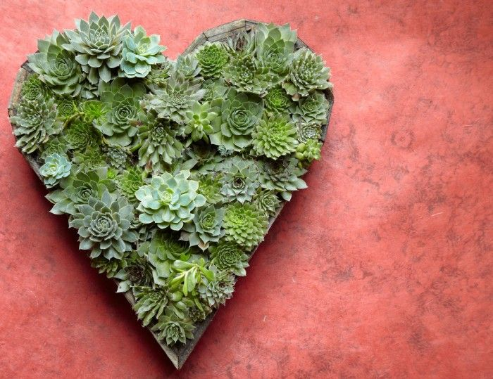 @FloraGrubb Succulent Heart for Mother's Day #DIY #garden