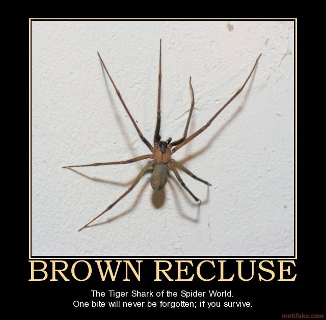 brown recluse spider bites - 640×629