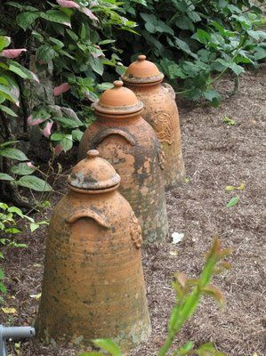 """Planting """"forcing jars"""" in gardens at Gresgarth Hall, England."""