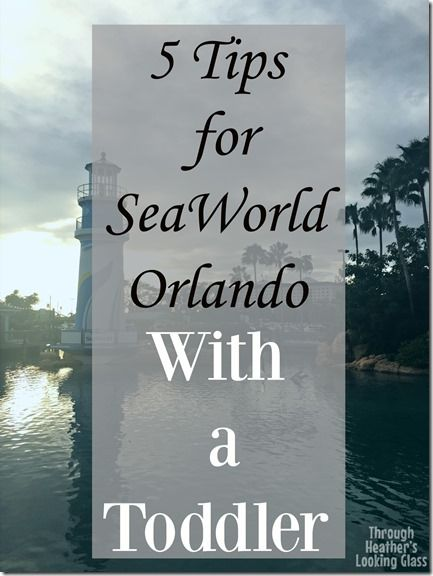 SeaWorld Orlando can be a lot of fun with a toddler, but also stressful if you don't follow the best tips and guides. See my best tips for planning the rides and shows on your vacation to Florida to visit the whales and dolphins!