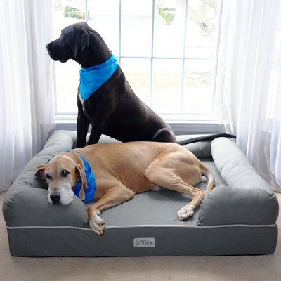 Petfusion Ultimate Lounge Premium Edition Dog Bed With Solid Memory Foam Size Jumbo Xl 13 H X 50 W X 40 D Cute Dog Beds Cool Dog Beds Xl Dog Beds