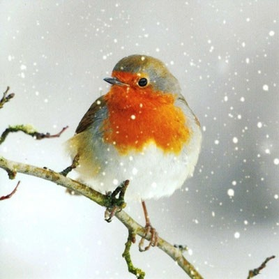 Pack of 8 Charity Christmas cards - Retail £4.99  http://www.orchardcards.co.uk/zal-8866c.html