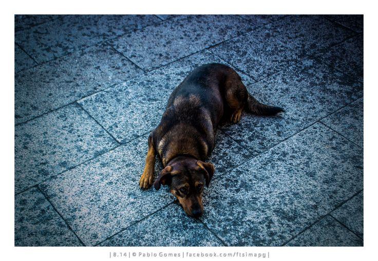 [2014 - Salvaterra do Minho - Espanha / España / Spain] #fotografia #fotografias #photography #foto #fotos #photo #photos #local #locais #locals #animal #animais #animales #animals #cao #perro #dog #europa #europe