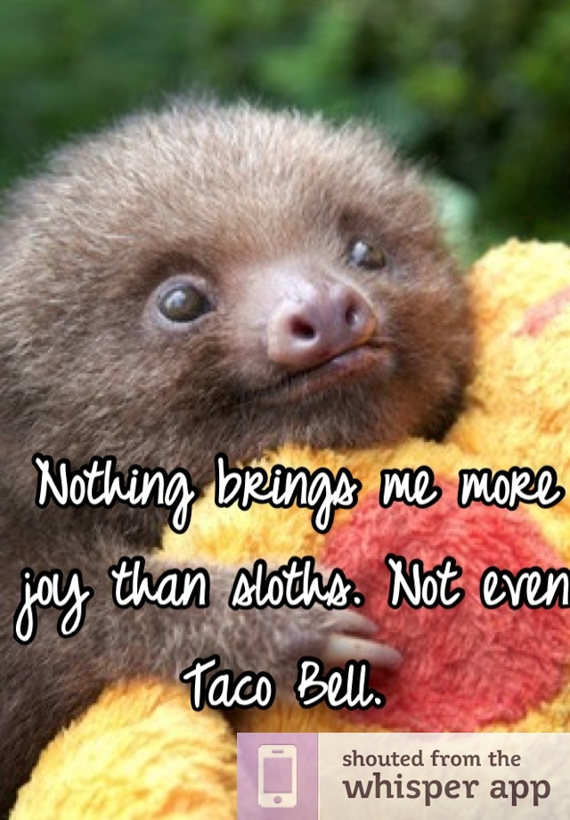 Nothing brings me more joy than sloths. Not even Taco Bell.