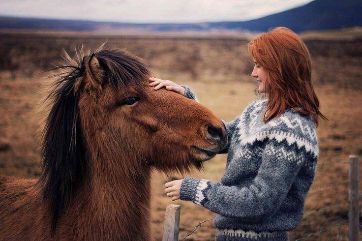 Icelandic horse horses, Iceland, Thingvellir Þingvellir national park girl ginger cuddle