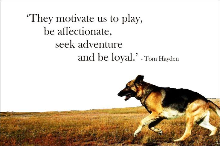 ~ Tom Hayden