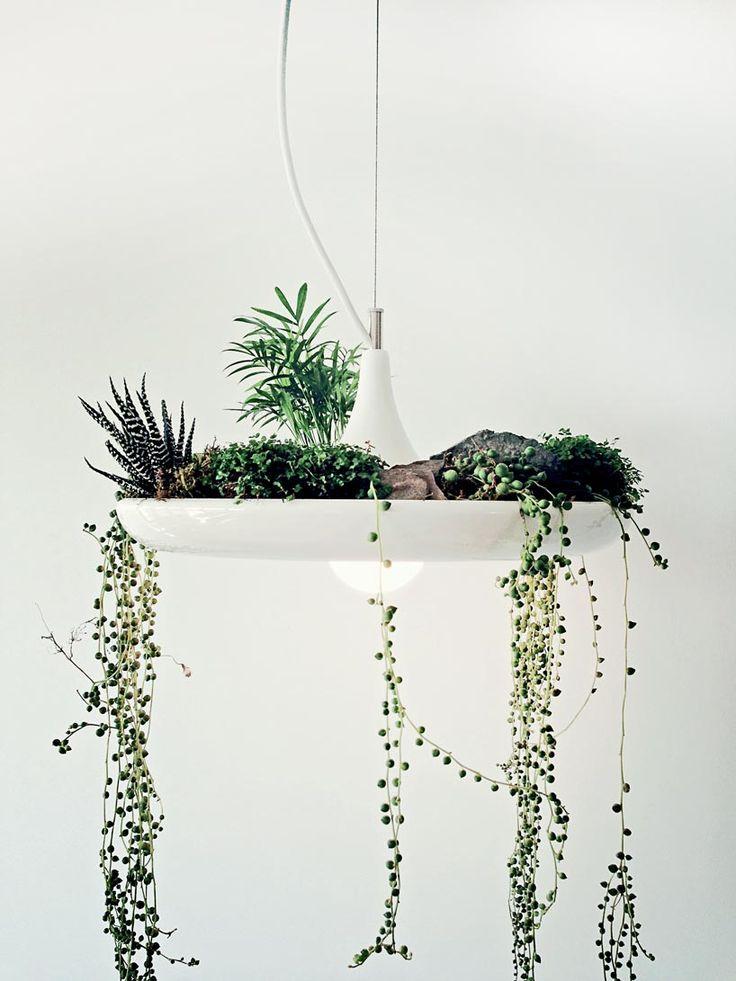 Plantable Light Fixture