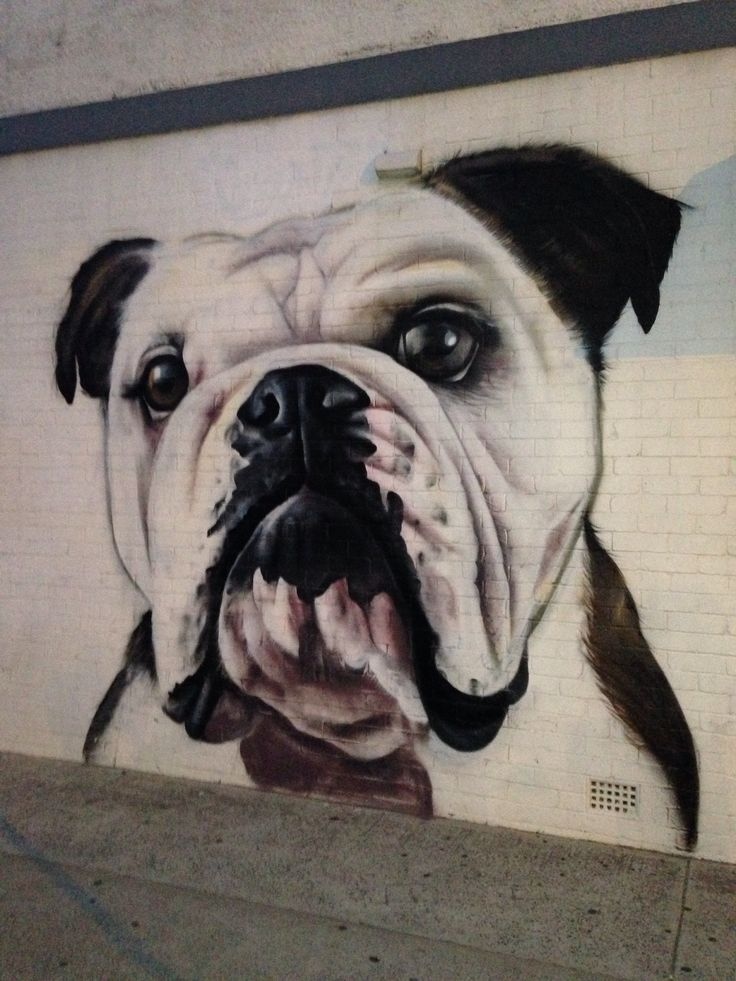 Bulldog, Street Art, by Bondi