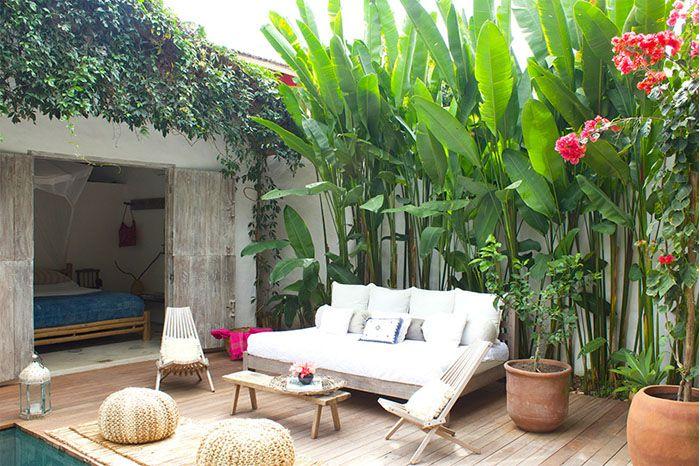 les 25 meilleures id es de la cat gorie bananier sur pinterest planter bananier bananier d. Black Bedroom Furniture Sets. Home Design Ideas