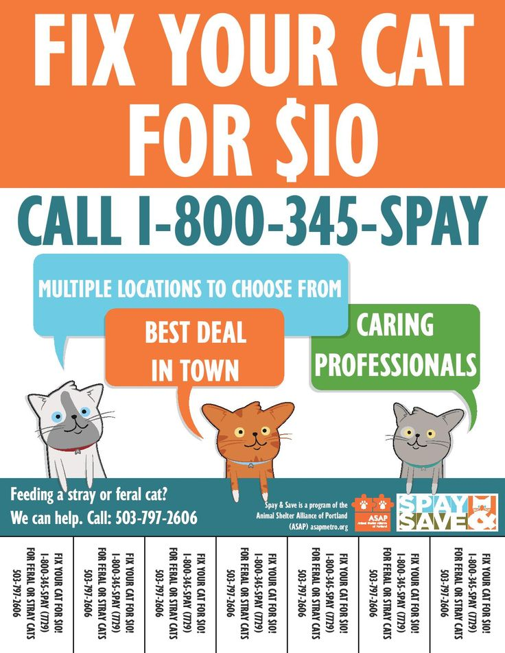 31+ Free Neutering For Feral Cats Near Me