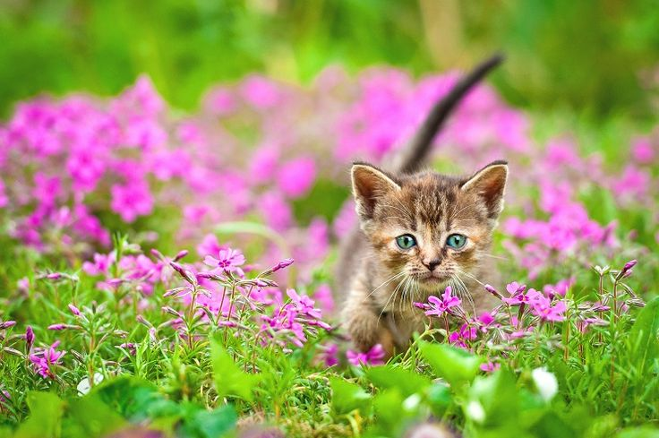 Z radością witamy piąteczek :D  http://www.fototapeta24.pl/ #piatek #friday #kot #cat #fototapeta #fototapeta24pl