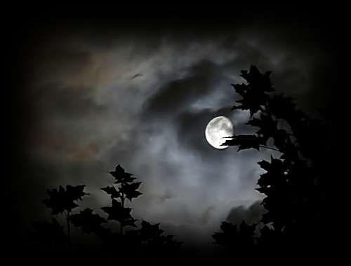 notte silenziosa - Buscar con Google