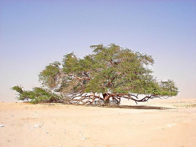 Tree of Life, Bahrain