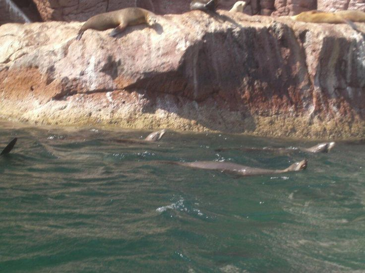 These sea lions at Los Islotes know how to cope with hot weather http://bajabybus.com/blog/item/15-la-paz-bcs