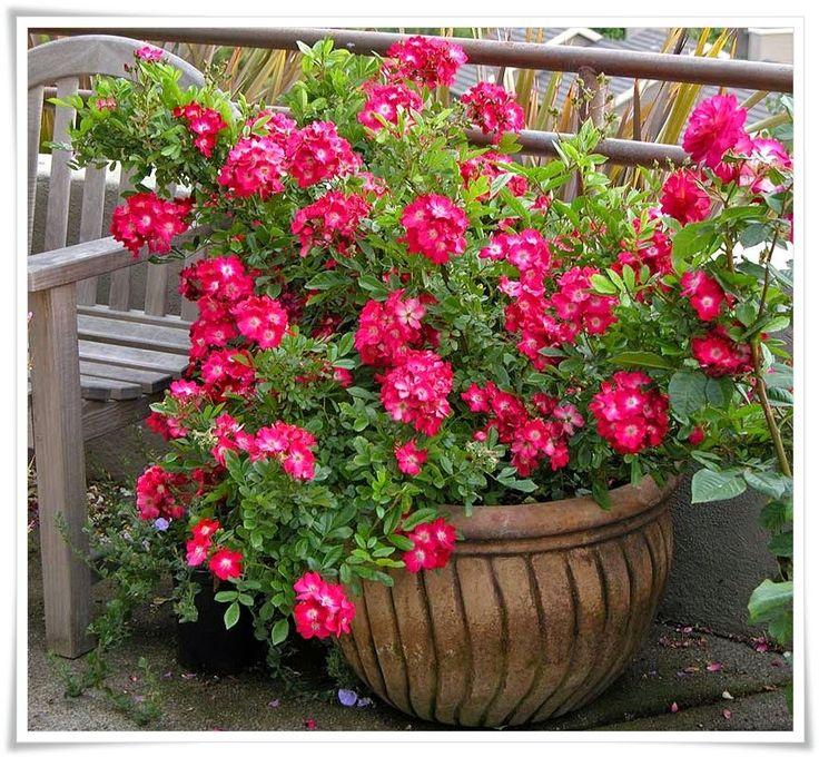 Savjeti Za Aranžiranje Cvijeća U Saksijama I žardinjerama