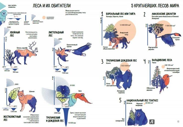 Иллюстрация 6 из 6 для Планета Земля. Мир вокруг нас в инфографике - Кьяра Пиродди | Лабиринт - книги. Источник: Лабиринт