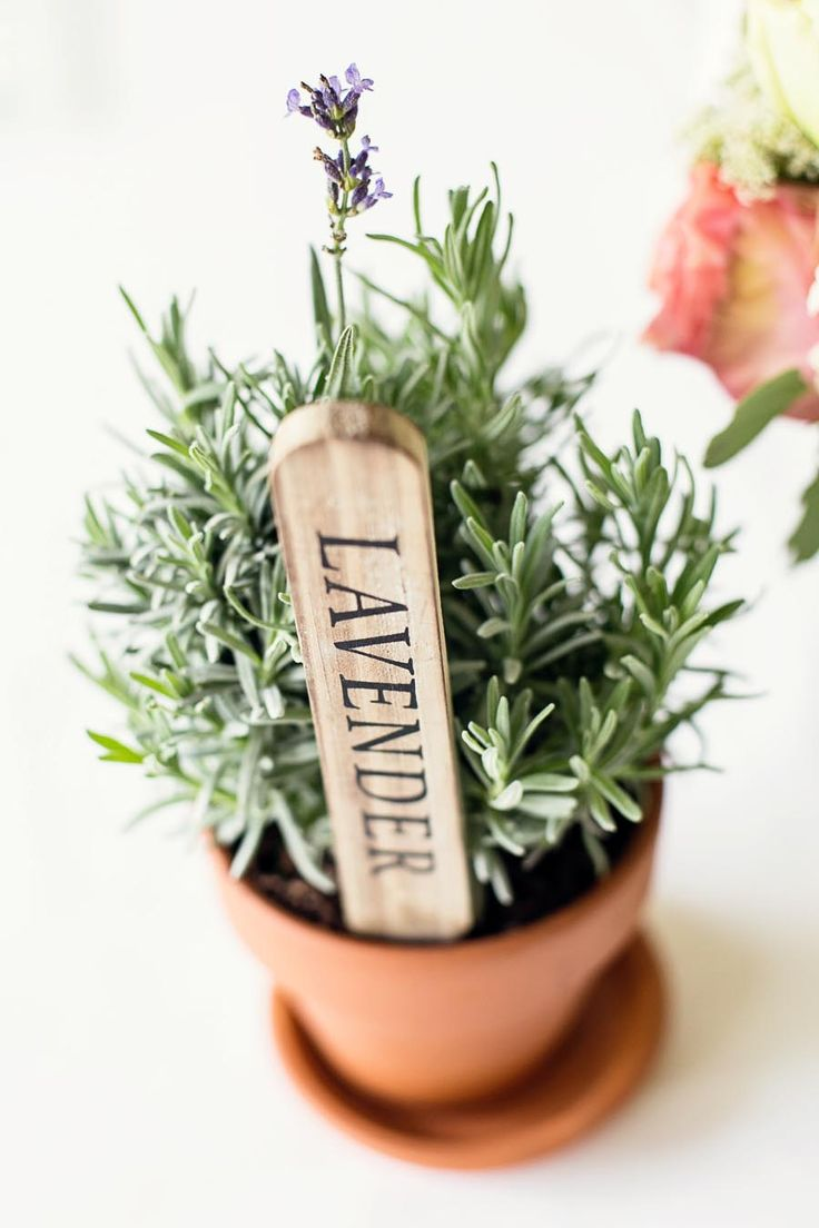 Potted Herb Centerpiece | photography by http://www.melissatuckphoto.com/
