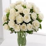 Send Flowers to Jalandhar and send gifts to Jalandhar with click of a link. We deliver flowers and gifts in Jalandhar, Florist in Jalandhar at affordable prices. http://flowershop18.in/flowers-to-jalandhar.aspx