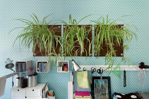 The Green Pockets Indoor