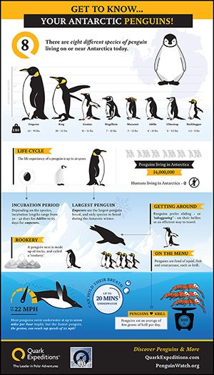 Penguin Infographic by quarkexpeditions #Penguins