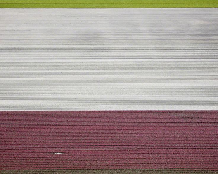 David Burdeny, 'Veld 02, Noordoostpolder, Netherlands', 2016