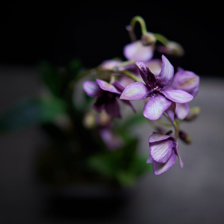 #dendrobiumorchids #botanicalart #coldporcelain s#coldpo
