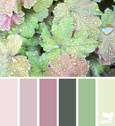 Coral bell color - pale purples, greens