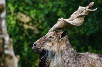 #秘密にしておきたかった生き物 のタグがスゴ過ぎる「このタグ全部神」「自然界恐るべし」 - Togetterまとめ