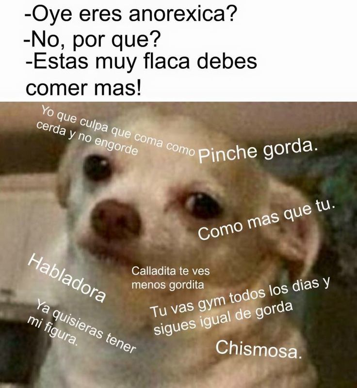 Anorexica? #memes #perrito #chihuahua