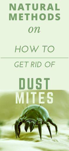 Best 25 Dust Mites Ideas On Pinterest Keep Spiders Away