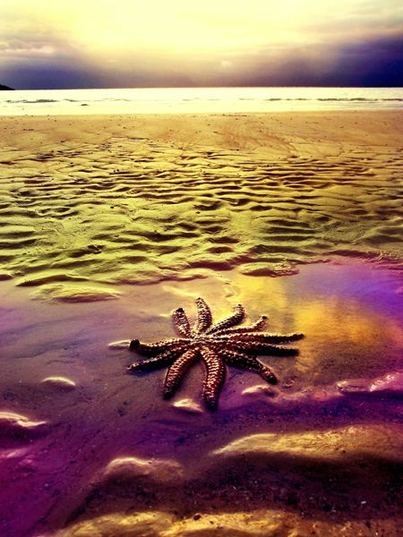 Washed Up Star by Andrew Pearce: Beautiful Natural, Ocean Wonder, Art Photographers, Art Photography, Amazing Colors, Andrew Pearc, Photographers Andrew, Lonely Starfish, Ocean Life