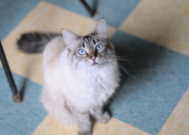 Les 25 meilleures id es de la cat gorie odeurs d 39 urine sur - Enlever odeur sur matelas ...