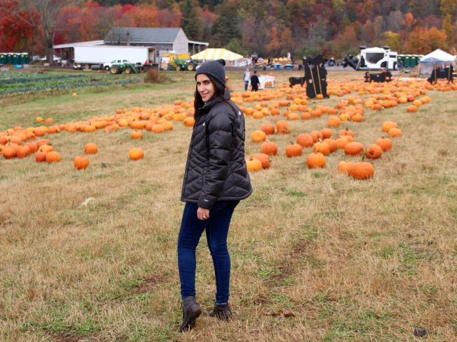Pumpkin Picking at Harvest Moon Farm and Orchard in North Salem, NY.