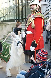 William Windsor (known as Billy), a goat in the military, was a lance corporal in the 1st Battalion, the Royal Welsh, an infantry battalion of the British Army.[1] He served as a lance corporal from 2001 until 2009, except for a three-month period in 2006 when he was demoted to fusilier, after inappropriate behaviour during the Queens Official Birthday celebrations while deployed on active duty with the battalion on Cyprus. He retired to Whipsnade Zoo in May 2009.