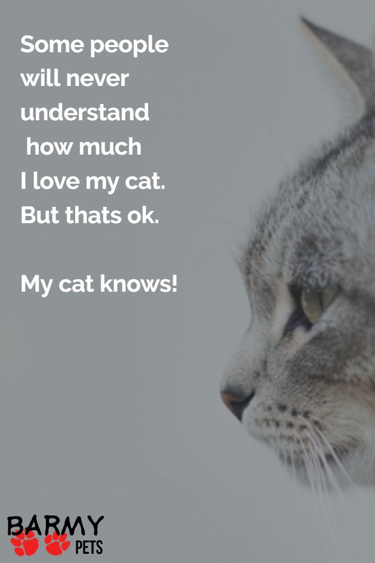 Quotes About Cats 92 Best Cat Quotes & Sayings Images On Pinterest  Cat Quotes