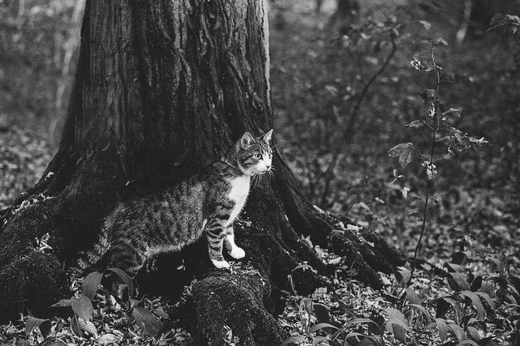 Czarno białe zdjęcie kota- na płótnie w Fotografia Monika Małek na DaWanda.com