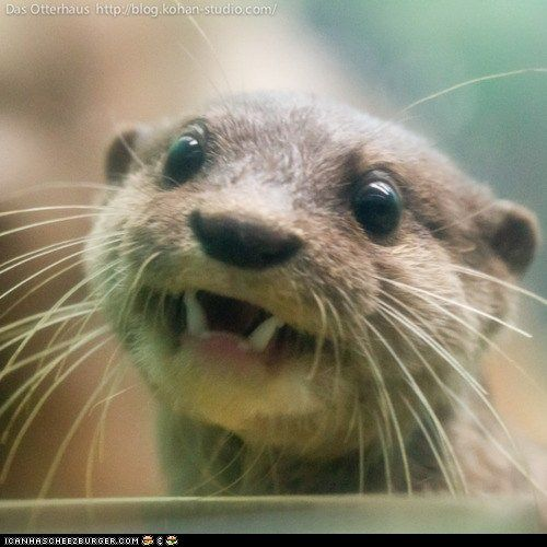 Peek!Animal Kingdom, Funny, Animal Cute, Adorable, Daily Squee, Things, Smile, Rivers Otters, Happy Otters
