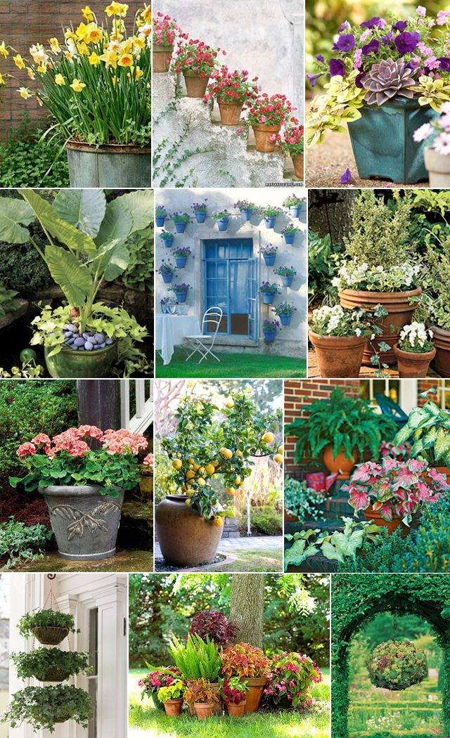 HOME - Container Garden Inspirations!