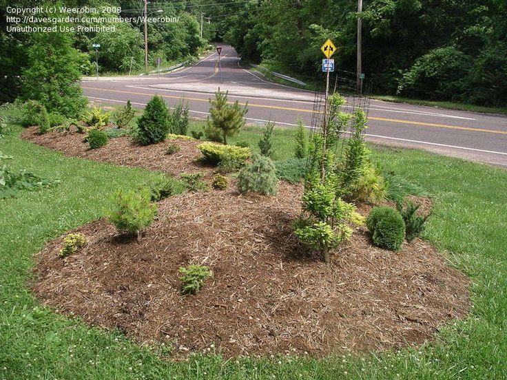 Front yard berm idea berm pinterest gardens babies for Landscape berm design