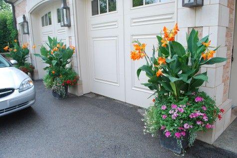 Orange Cannas and petuniasGardens Ideas, Canna Jpg, Garages Doors, Ideas Canna, Orange Cannas Jpg, Flower Gardens, Gardens Flower, Flower Beds, Telly Greenhouses